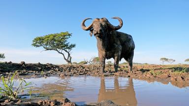 Terra X Dokumentationen Und Kurzclips - Serengeti (2/3): Zeit Der Wanderung