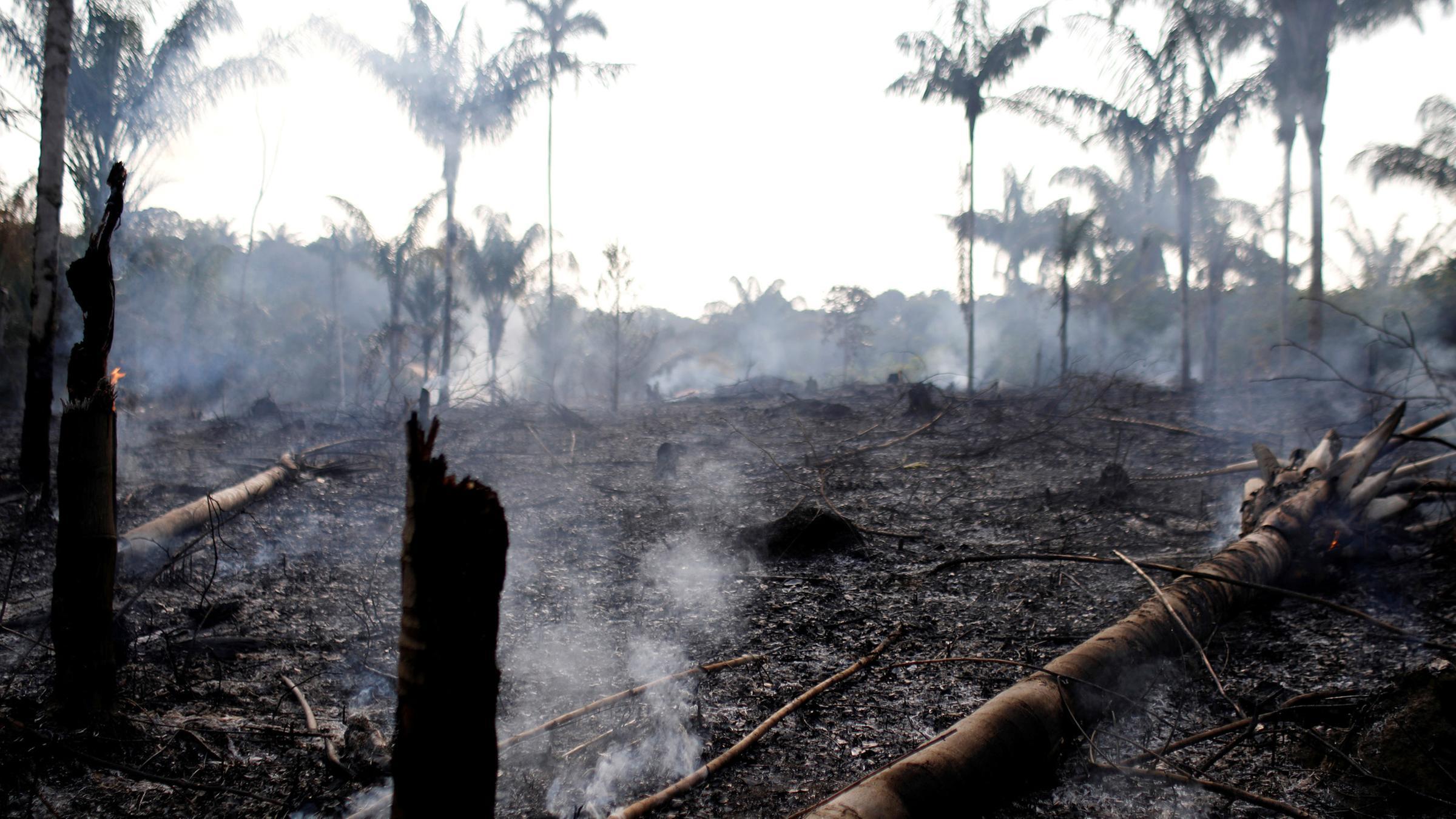 Waldbrand amazonas