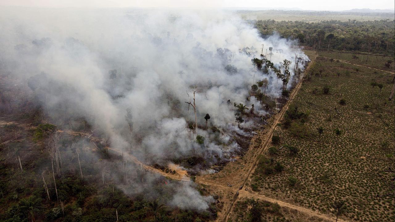 Nach Wahl in Brasilien: Bolsonaros Abschied vom Klimaschutz - ZDFmediathek