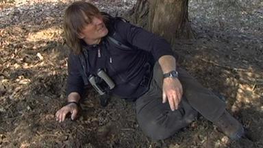 Andreas Kieling liegt in einem Wildschweinkessel