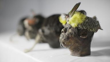 Zdfinfo - Aufgedeckt - Rätsel Der Geschichte: Geheimnis Der Schrumpfköpfe