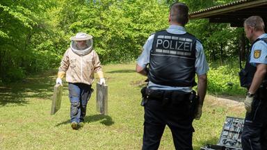 Terra Xpress - Geklaute Bienen Und Der Straßen-irrsinn