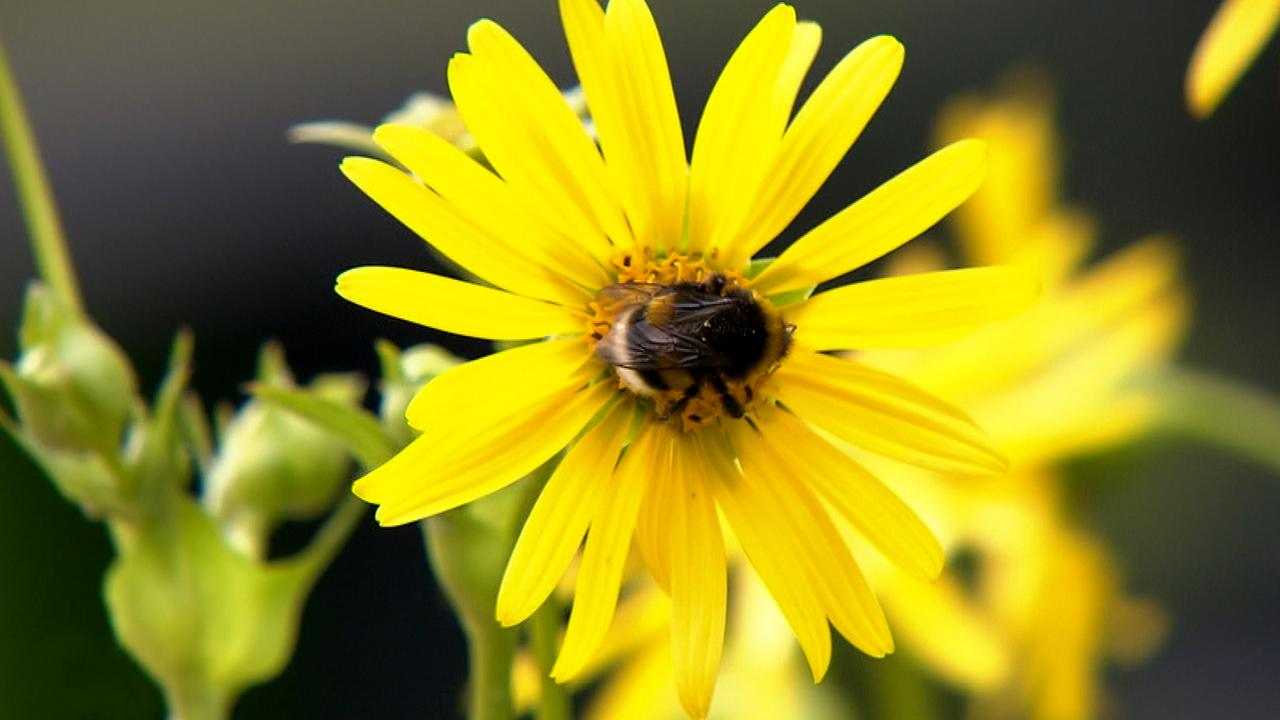 """""""Bienenstrom"""": Ein Projekt mit Zukunft?"""