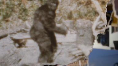 Zdfinfo - Bigfoot - Mythos Auf Dem Prüfstand