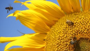 Planet E. - Planet E.: Bioschutz Statt Ackergift