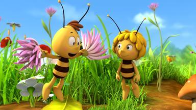 Die Biene Maja: Abenteuer Auf Der Klatschmohnwiese - Die Biene Maja: Auf Die Blume, Fertig, Los!