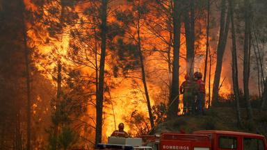 firefighters work to put out fire during a forest fire in capelo