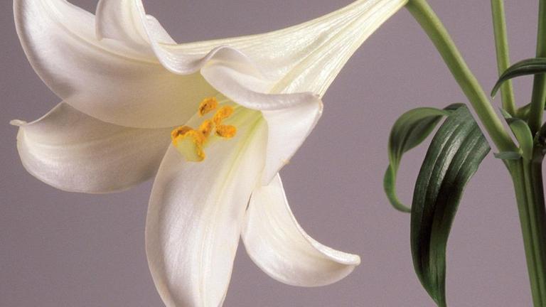 Blumen und ihre Bedeutung - ZDFmediathek