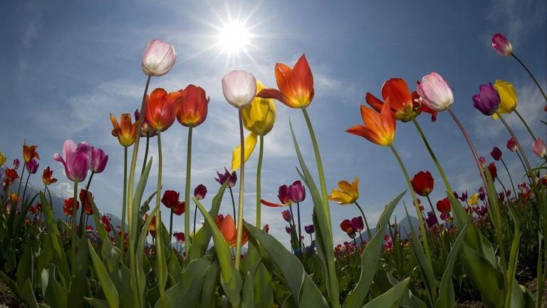 Blumen Und Ihre Bedeutung Zdfmediathek