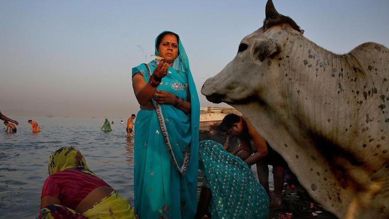 Heilige Tiere In Indien Zdfmediathek