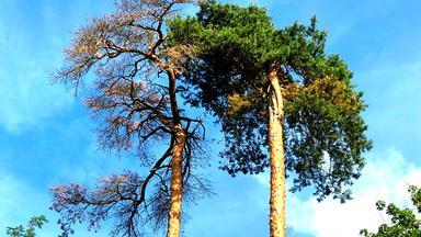 Planet E. - Das Neue Waldsterben