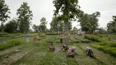 Planet E. - Der Milliarden-bäume-plan
