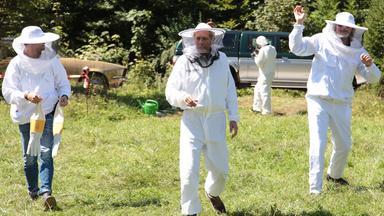 Soko Wien - Die Bienenkönigin