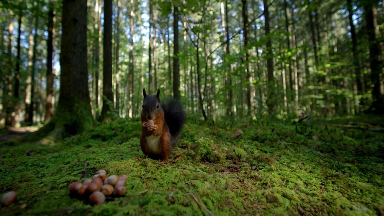 Unsere Wälder (2/3): Ein Jahr unter Bäumen
