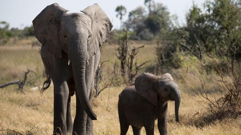 Wie Elefanten denken