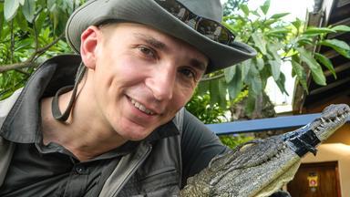 Pur+ - Das Entdeckermagazin Mit Eric Mayer - Pur+ Eric Rettet Krokodile