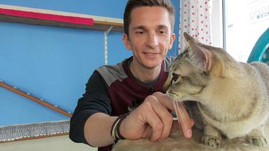 Pur+ - Das Entdeckermagazin Mit Eric Mayer - Pur+ Katzen