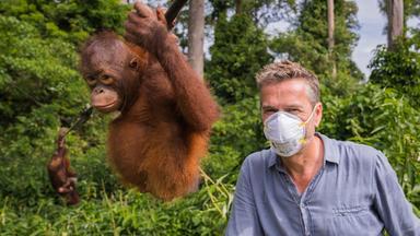Terra X Dokumentationen Und Kurzclips - Faszination Erde: Der Malaiische Archipel