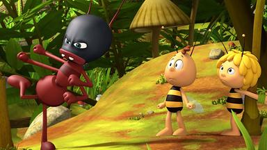 Die Biene Maja: Abenteuer Auf Der Klatschmohnwiese - Die Biene Maja: Eine Ameise Namens Kung-fu