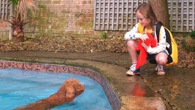 Wuffel, Der Wunderhund - Wuffel, Der Wunderhund: Erfrischung Im Pool
