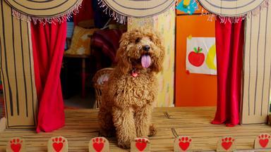Wuffel, Der Wunderhund - Wuffel, Der Wunderhund: Künstler Auf Vier Pfoten