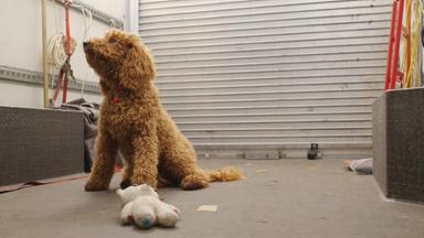 Wuffel, Der Wunderhund - Wuffel, Der Wunderhund: Der Familienausflug