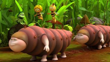 Die Biene Maja: Abenteuer Auf Der Klatschmohnwiese - Die Biene Maja: Die Raupenwanderung
