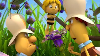 Die Biene Maja: Abenteuer Auf Der Klatschmohnwiese - Die Biene Maja: Das Zepter Der Königin