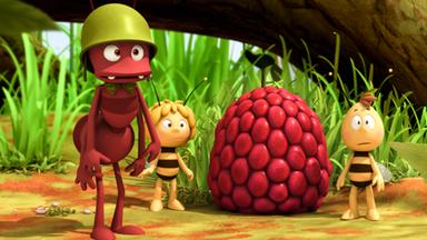 Die Biene Maja: Abenteuer Auf Der Klatschmohnwiese - Die Biene Maja: Pauls Himbeere