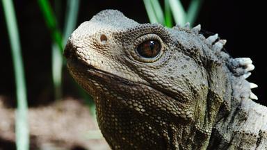 Zdfinfo - Neuseeland - Rivalen Der Urzeit (1/5) Lebende Fossilien