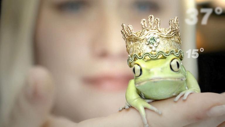 Frosch aus dem 37 Grad Vorspann