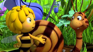 Die Biene Maja: Abenteuer Auf Der Klatschmohnwiese - Die Biene Maja: Der Getigerte Rufus