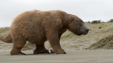 Zdfinfo - Giganten Der Urzeit: Mega-hai Und Riesenfaultier
