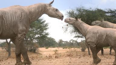 Zdfinfo - Giganten Der Urzeit: Riesenschlange Und Mega-nashorn