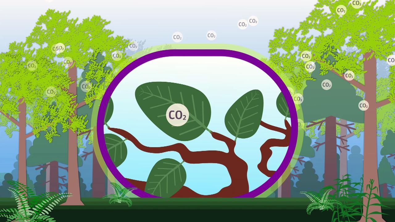 Was kann Kohlenstoff-Datum Datum
