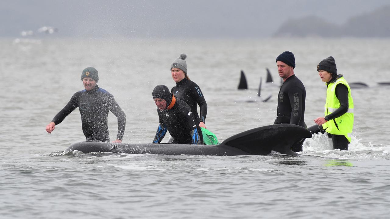 Wale Australien