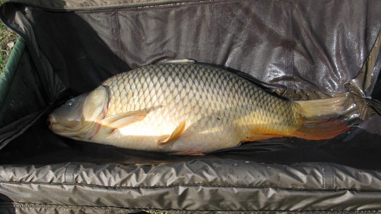 Verbotene h user und verschwundene fische zdfmediathek for Fische in teichen