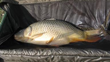 Terra Xpress - Verbotene Häuser Und Verschwundene Fische