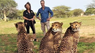 Dokumentation - Hannes Jaenicke: Im Einsatz Für Geparden