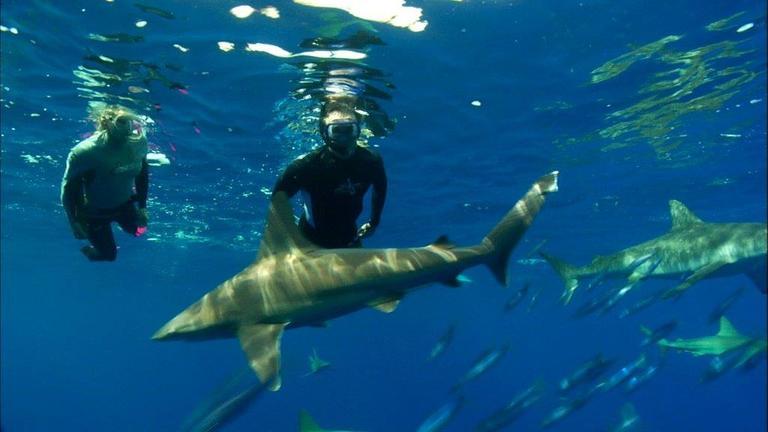 Hannes Jaenicke: Im Einsatz für Haie