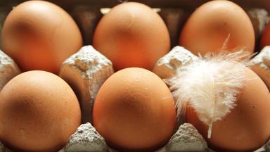 Sonntags - Tv Fürs Leben - Ach, Du Liebes Ei