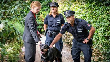 Notruf Hafenkante - Notruf Hafenkante: Hund Und Katze