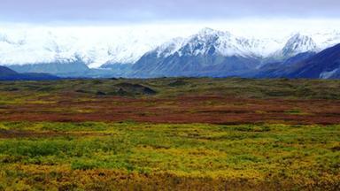 Dokumentation - Im Zauber Der Wildnis - Denali National Park