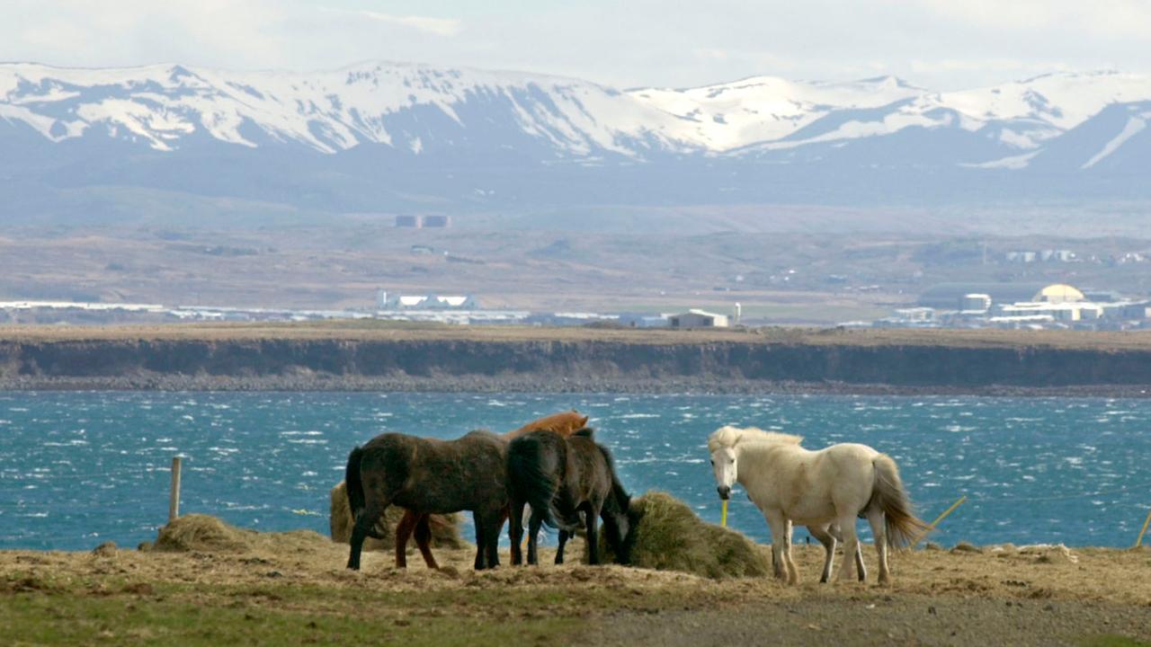 Island Krimi Zdf