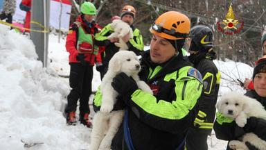 Italien: Bergung von Hundewelpen