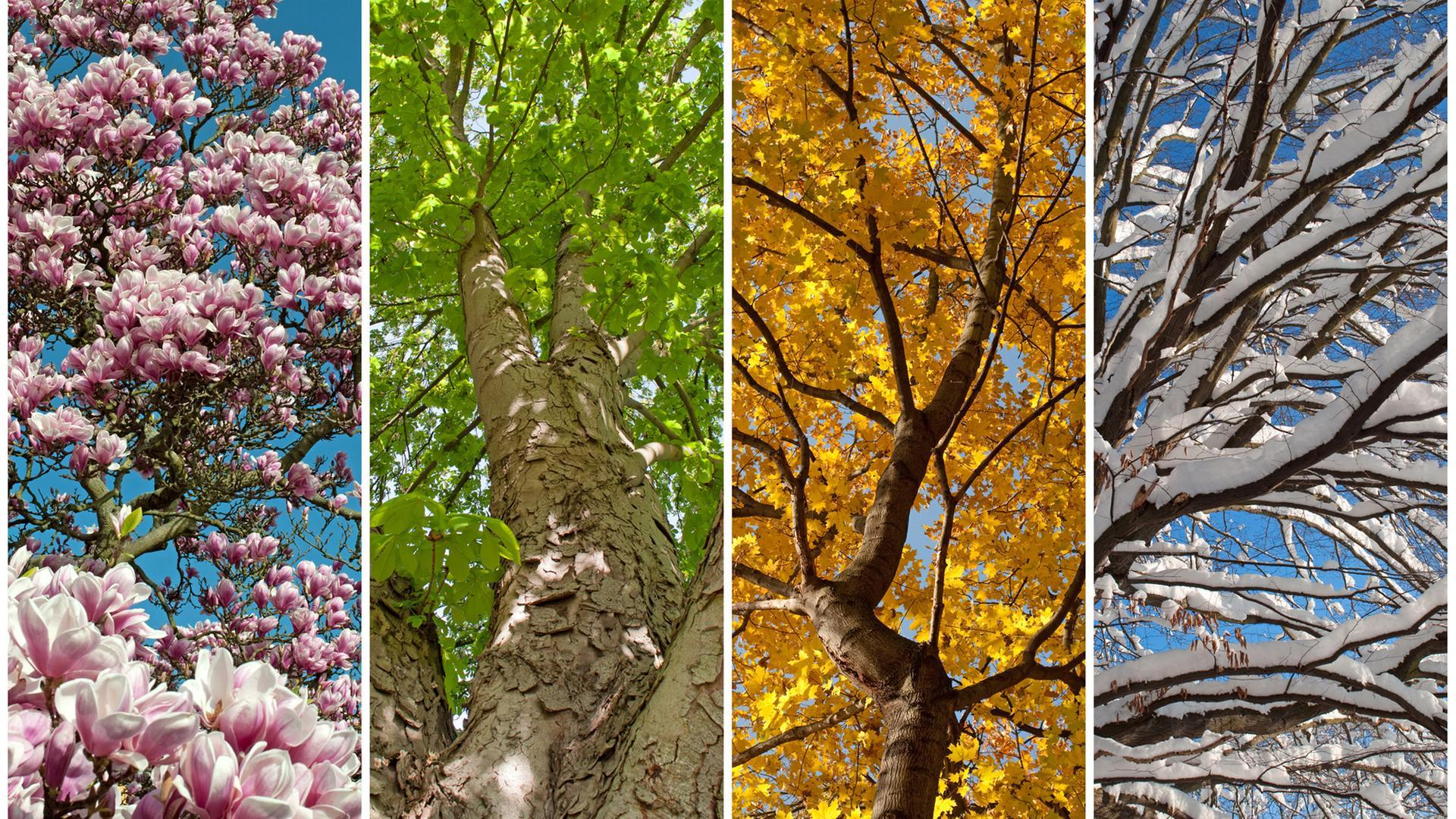 Geliebte Beobachtung von Pflanzen: Die Jahreszeiten verschieben sich @TK_82
