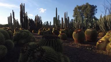 "Kakteen der Kaktus-Farm ""Cactus Thiemann"""