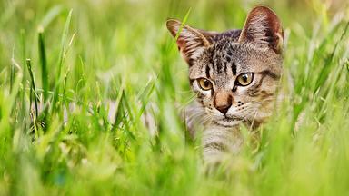 Terra X Dokumentationen Und Kurzclips - Geschichte Der Tiere: Die Katze