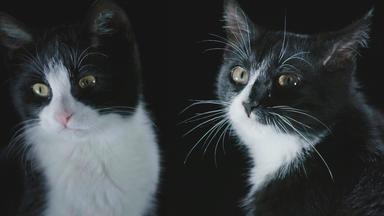 Dokumentation - Das Wahre Wesen Unserer Hunde Und Katzen