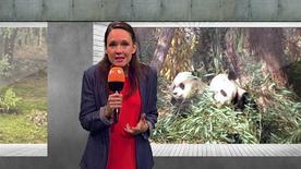 Carolin Kebekus über chinesische Panda-Diplomatie